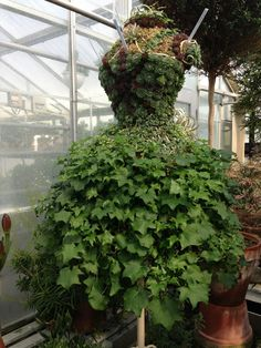 """Check out this gorgeous dress-shaped topiary that Dorrance """"Dodo"""" Hamilton and her crew are growing to compete in this year's Horticourt!"""