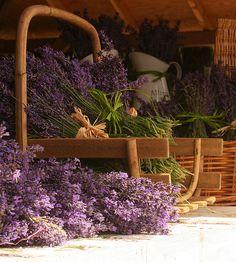 Lavender:  #Lavender bouquets.