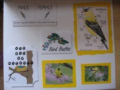 backyard birds lapbook free