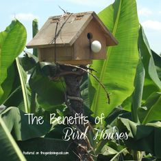 A bird house adds interest to your garden and keeps the feathered friends coming.  See the benefits of having them: http://thegardeningcook.com/benefits-of-bird-houses/