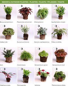 Karoo-  Innenpflanzen die sich gut für den Vertical Garden eignen. Das Modul gibt es bei www.stadtlandbalkon.de in grau oder weiß