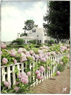 We would love to have a fence lined with some beautiful #hydrangeas!