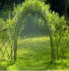 Living willow arch and fencing-so want to do this!