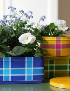 For some reason these Ikea tins are way cuter than flower pots.
