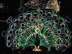 Lights Before Christmas at the Toledo Zoo - fun way to kick off the holidays.