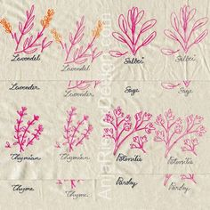 Anja Rieger EMbroidery Designs $12.10