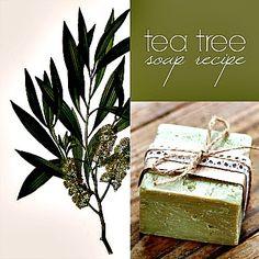 Homemade Tea Tree Soap Recipe (nice recipe)