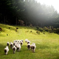 Ps 23: The Lord is my Shepherd.