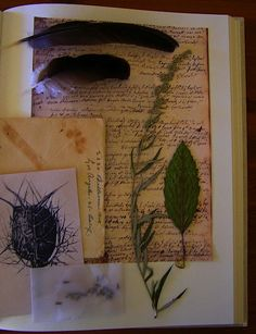 books, practical magic spells, practic magic, practical magic book, bos, natur notebook, leaves, feathers, apart witch