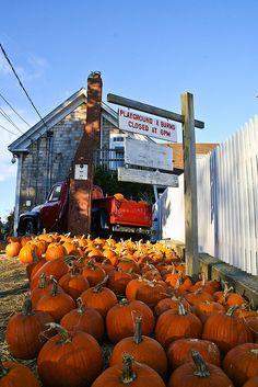 pumpkin patch love!