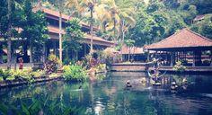 5 Amazing Bali Hotels under $100!