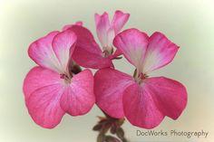 Pink Dancers