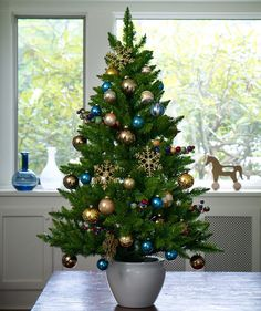 A table top potted tree can adorn your home long after the decorations have been put away via @lisa Choe Simple