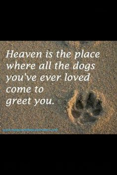 In memory of Samson and Spunky