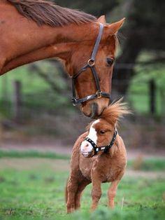 Mini horses need love too.