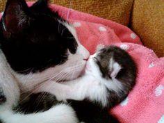 Kitten Gets a Goodnight Kiss <3 <3 <3