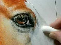 """Painting a Day Demonstration - Gypsy Vanner by Roberta """"Roby"""" Baer PSA portrait paintings, gypsi vanner, painting techniques"""