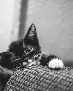 Lil cutie