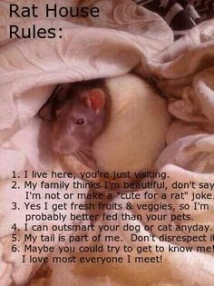 Rat house rules