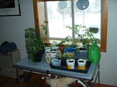 Living Off Grid - How we grow winter vegetables