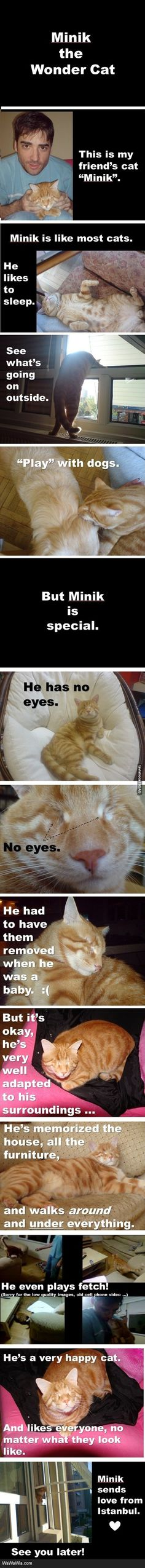 :C aww.. cats, anim, minik, stuff, wondercat, inspir, kitti, wonder cat, thing
