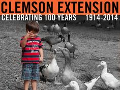 Joel Cook feeding ducks and geese at a pond in Anderson, SC. Photographer: Peter Tögel #ClemsonExt100