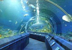 underwater_world.jpg