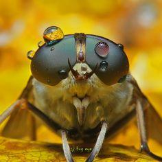 Bug eye ...