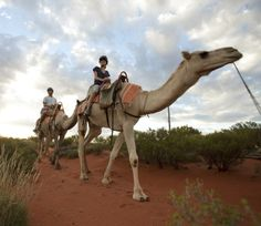 Take a ride on a camel when you stay at Longitude 131°