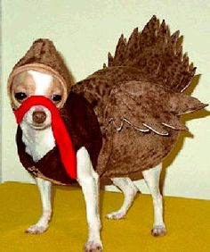 Gobble, Gobble-Happy Turkey Day!