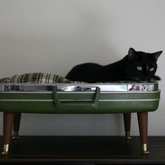 cat bed from vintage suitcase