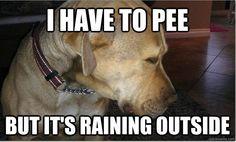 dog problem, anim, laugh, dogs, stuff