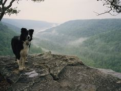 A Border Collie Stands on the Bluff at Ravens Point, Tennessee Photographic Print