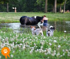 """Runner Up. Copper and Blue, adopted from Lawrence Humane Society - Lawrence, KS: """"Copper and Blue are enjoying the dog days of summer on THEIR new farm."""""""