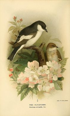 n187_w1150 by BioDivLibrary, via Flickr