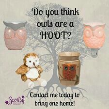 #owl #scentsy https://christypierce.scentsy.us/Scentsy/Buy/Search?query=owl