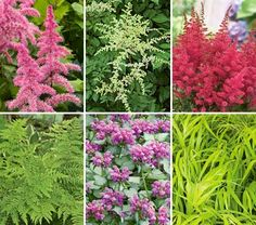 NEW! Tough As Nails Deer-Resistant Garden for Shade  13 plants  Astillbe, Forest grass  Lamium