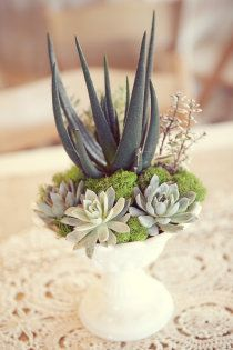 Cactus, moss, and succulent eco-friendly wedding centerpieces.