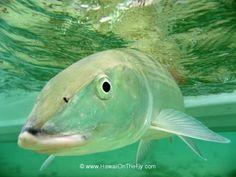 fli fish, bucket list, fish bucket