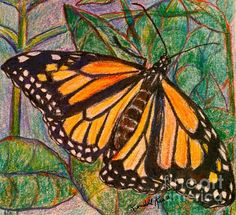 Beauty of Butterflies on Pinterest