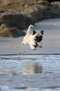 I did it!!!! I'm flying!!!!! ... Brought to you in part by StoneArtUSA.com ~ affordable custom pet memorials since 2001