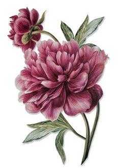 tattoo, pink peonies, flower
