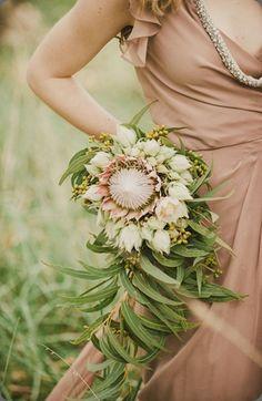 botanical brouhaha: King Protea