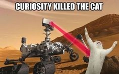 Curiosity killed the cat.   # Pinterest++ for iPad #