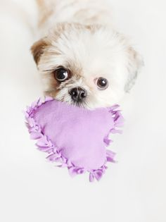 No-Sew DIY Love Heart Dog Toy! Super easy and super sweet Valentines project. #valentine #DIY #no-sew #puppy