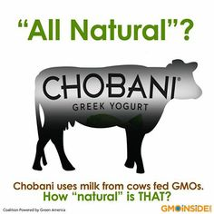 Chobani Uses Milk From Cows Fed GMOs. How Natural Is That? Take Action Here: http://gmoinside.org/take-action/chobani-uses-milk-cows-fed-gmos-natural
