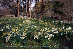 water gardens, shrub walk, walk april