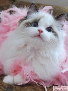 Fancy feline.