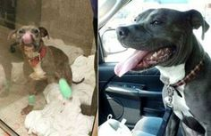 Cleveland Policeman adopts abused dog after rescuing him from his abuser.