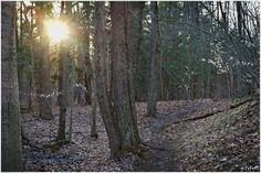forest sundown